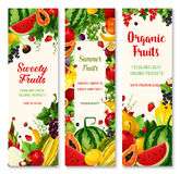Summer fruit and berry banner set for food design Stock Photography