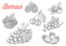 Summer fruit and berry sketch for food design. Summer fruit and berry sketch. Fresh raspberry, strawberry, grape, cherry, blackberry, currant and blueberry Royalty Free Stock Image