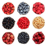 Summer fruit collection. Selection of summer fruits including: blueberries, raspberries, black, white, and red currants, wild blueberries and strawberries royalty free stock photography