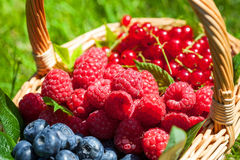 Summer fruit. Fresh summer fruit in a basket on the grass Royalty Free Stock Photo