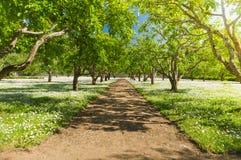 Summer fruit garden walkway under sunlight Stock Photo