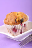 Summer fruit muffin Royalty Free Stock Images