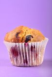 Summer fruit muffin royalty free stock photo