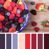 Summer fruit selection palette Royalty Free Stock Photos