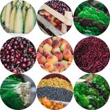 Summer fruit and vegetables collage Royalty Free Stock Photos