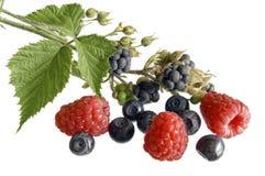 Summer fruits. Blackberries, raspberries, bilberries on white stock images