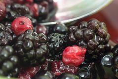 Summer Fruits - Bowl of Berries (Macro) Stock Image