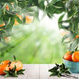 Summer fruits mandarin on abstract green background. On white empty wooden table with copy space Stock Photo