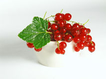 Summer fruits: Redcurrant Royalty Free Stock Images