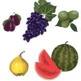 Summer fruits set Royalty Free Stock Images
