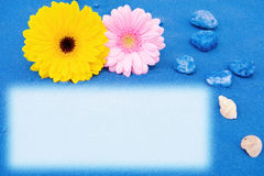Summer fun at the beach. Summer holidays at the beach with blue sands, daisy gerbera flowers and seashells. Room for your text Royalty Free Stock Photography