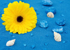 Summer fun at the beach. With yellow daisy, seashells and blue sands Royalty Free Stock Photo