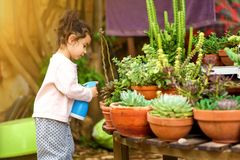 Summer Fun: Little Beautiful Girl Watering Garden. Candid cozy image cute child, little gardener sprinkling plants. Young sweet girl sprays succulent and cactus stock photos