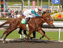 Summer Games Breaks Her Maiden. ARCADIA, CA - 1 JAN 10: Summer Games (#5) under Michael Baze, noses out Win for M'lou, under Joe Talamo, to win her first race at Royalty Free Stock Photo
