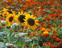 Free Summer Garden Royalty Free Stock Photo - 15697815