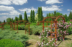 Summer garden. Botanical garden in summer in Iasi Royalty Free Stock Images