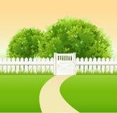 Summer garden Stock Image