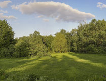 Summer garden. Stock Photography