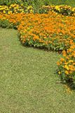 Summer Garden. A lawn and orange flowerbed royalty free stock photography