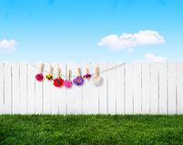Summer garden background Royalty Free Stock Photography