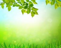 Summer garden background Stock Image
