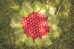 Summer garden background with ripe raspberries on grass and falling sunlight Stock Images