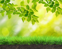 Summer garden background Royalty Free Stock Images