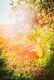 Summer garden background with sunshine and lovely flowers bed royalty free stock photos