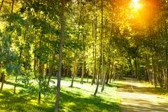 Beautiful sunshine park stock photography