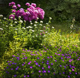 Summer garden Stock Photos