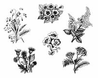 Summer garden blooming flowers, black and white illustration set Royalty Free Stock Image