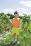 In the summer the garden boy holding a carrot. Stock Images