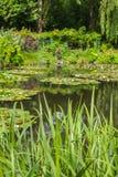 Summer garden Stock Images