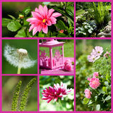 Summer garden collage Stock Images