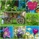Summer garden collage Royalty Free Stock Photo