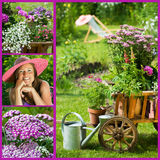 Summer garden collage Royalty Free Stock Image