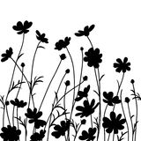 Summer garden. Cosmos flower silhouette isolated on white. Vector illustration Stock Photography