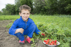In the summer the garden curly boy vomits strawberries in a bowl Royalty Free Stock Photography
