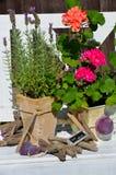 Summer Garden decoration flowers Stock Image