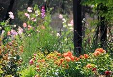 Summer garden flowers Stock Photography