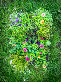 Summer garden flowers in pot on green garden grass background, top view Royalty Free Stock Photo