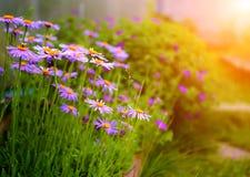 Summer garden with flowers Stock Photos