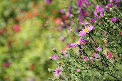 Summer Garden Flowers. Short depth-of-field. Beautiful summer garden with flowers Stock Photography