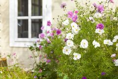 Summer garden flowers and summerhouse royalty free stock photos
