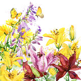 Summer garden flowers. watercolor illustration. Background Royalty Free Stock Photo