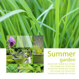 Summer garden Stock Image