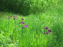 Summer Garden. Intense purple, magnificent light, the green I will miss in one month Royalty Free Stock Photos