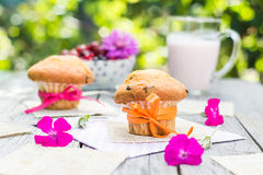 Summer garden muffins fruit cocktail Royalty Free Stock Images