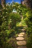 Summer garden and path stock image
