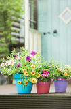 Summer garden pots Stock Photography